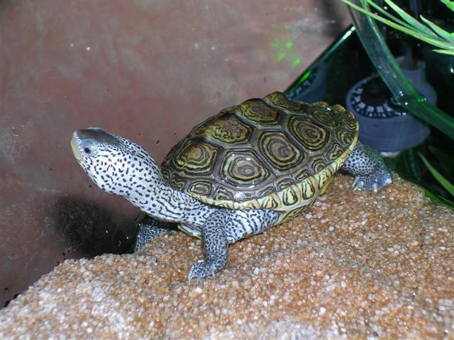 tortue-d-eau-15.jpg